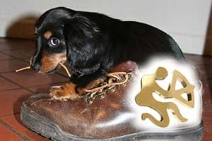 dog, shoe, Sagittarius